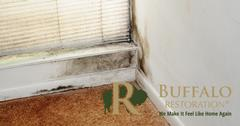 Mold Removal in Jackson, MT