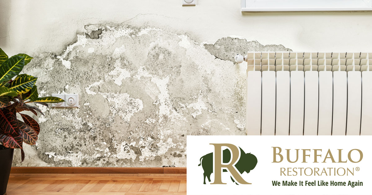 Mold Removal in Bozeman, MT