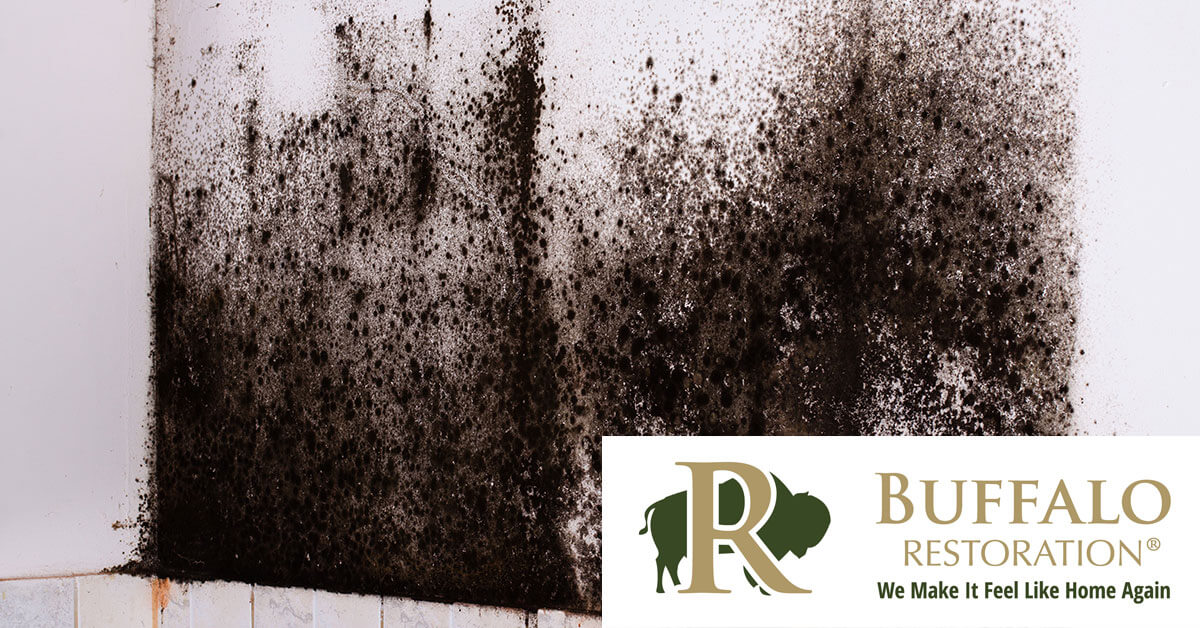 Mold Removal in Silver Star, MT