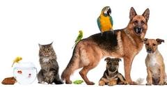 Pets During Restoration