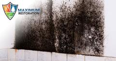 Professional Mold Removal in Bellbrook, OH
