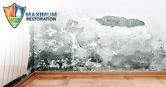 Professional Mold Mitigation in Englewood, OH
