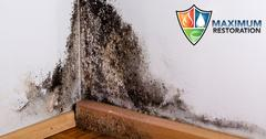 Professional Mold Mitigation in Dayton, OH