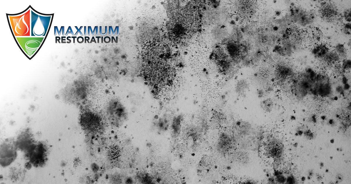 Professional Mold Mitigation in Oakwood, OH