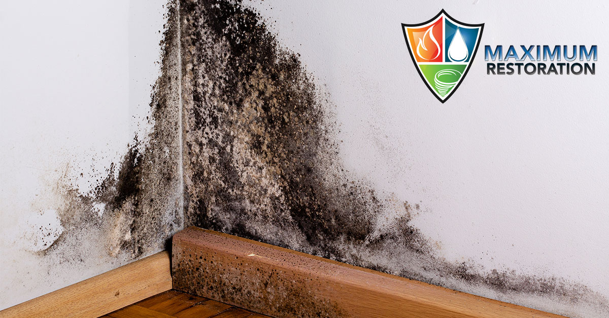 Professional Mold Remediation in Bellbrook, OH