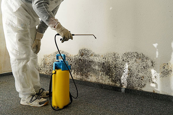 Mold Remediation Technicians Removing Mold