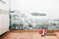 Mold Removal in Fairview, KY