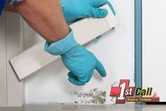 Mold Removal in Florence, KY