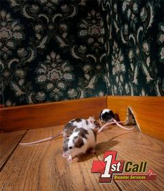Raccoon Damage Cleanup in Crestview, KY