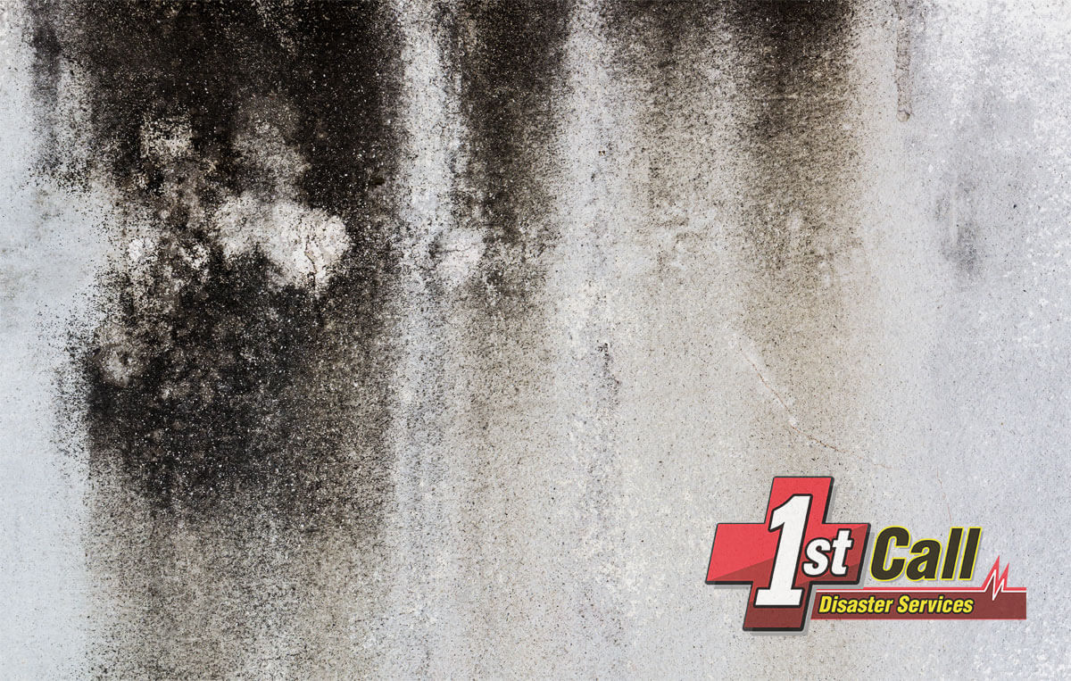 Mold Removal in Silver Grove, KY