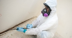 How To Remove Black Mold and Why You Don't Want to Do It Yourself