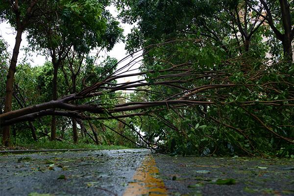 Storm Damage Restoration in Florence, KY