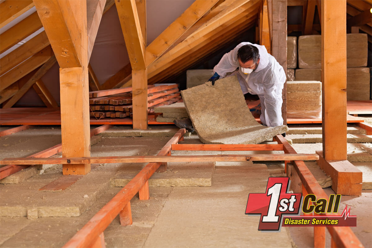 Raccoon Damage Restoration in Independence, KY