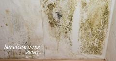 Mold Removal in Mineral, VA
