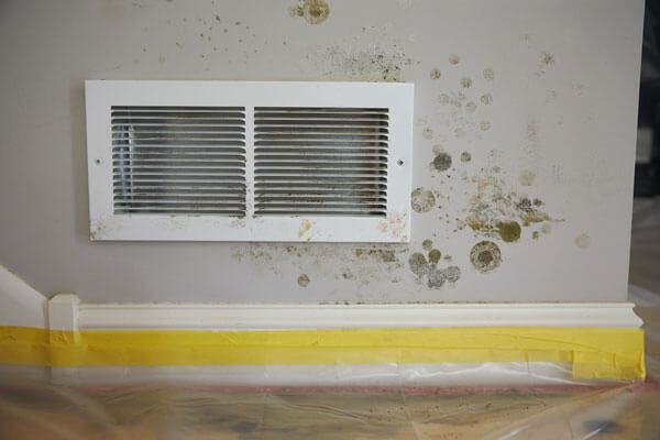 Mold Remediation in Charlottesville, VA