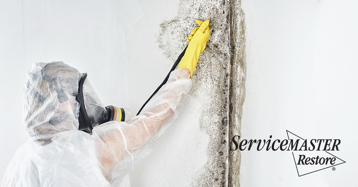 Mold Abatement in Shopville, KY