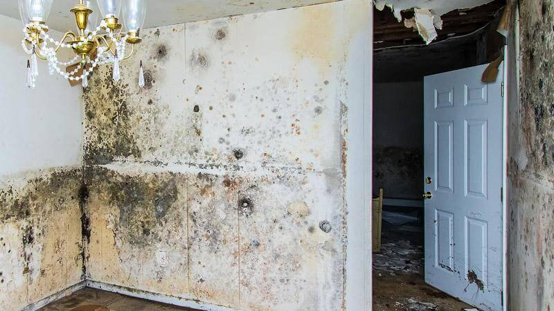 professional mold removal contractors in CDP of Greece Monroe County Greece New york