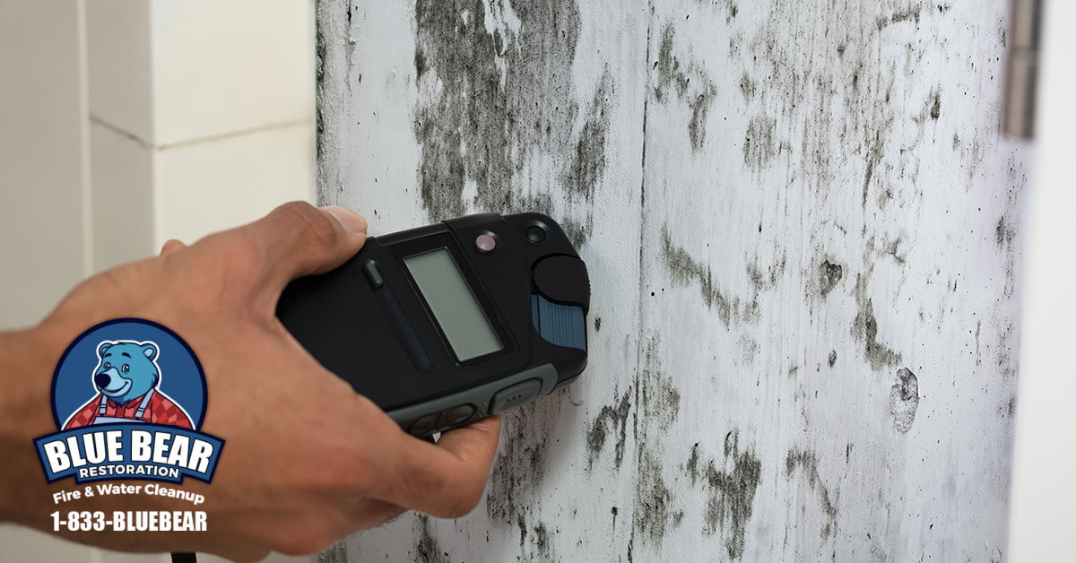 Mold Removal in Spencerport, NY