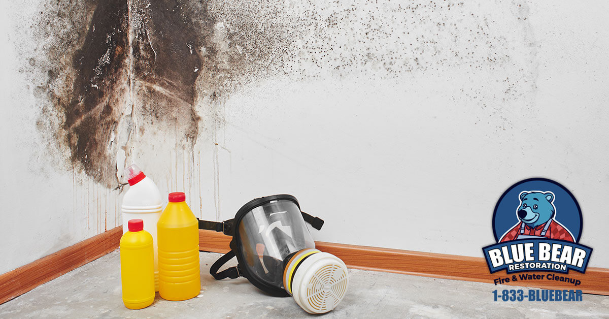 Mold Removal in Fairport, NY
