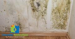 Mold Removal in Algood, TN