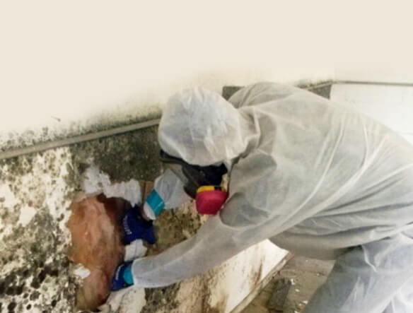 Durham Mold Inspection