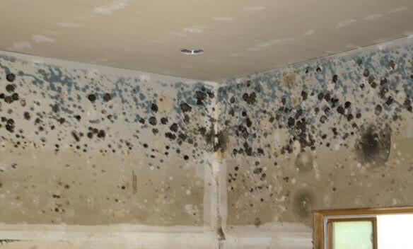 Durham Mold Removal