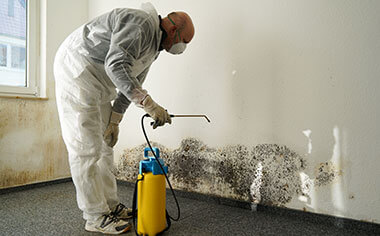 mold removal in Carlsbad, CA