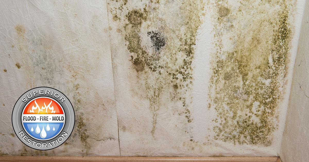 Mold Remediation in Chula Vista, CA