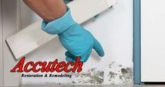 Mold Remediation in Venice, FL