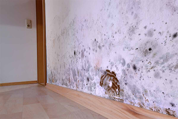 Mold Remediation in Englewood, FL