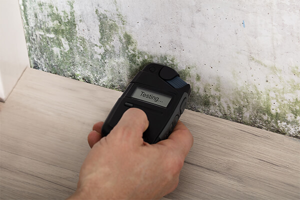 Mold Remediation in Venice, FL