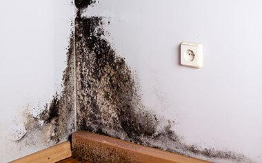 basement mold
