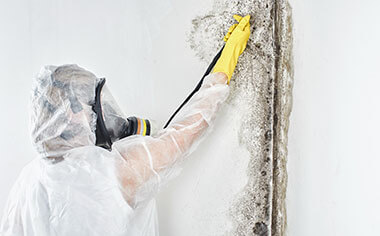 mold removal in Mount Pleasant, WI