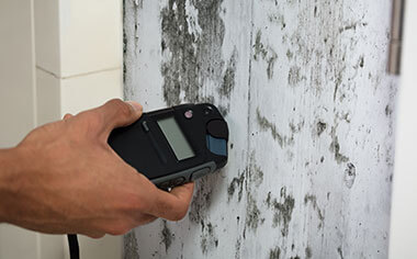 mold removal in Andover, MN