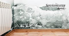 Professional Mold Remediation in Elk Grove, CA