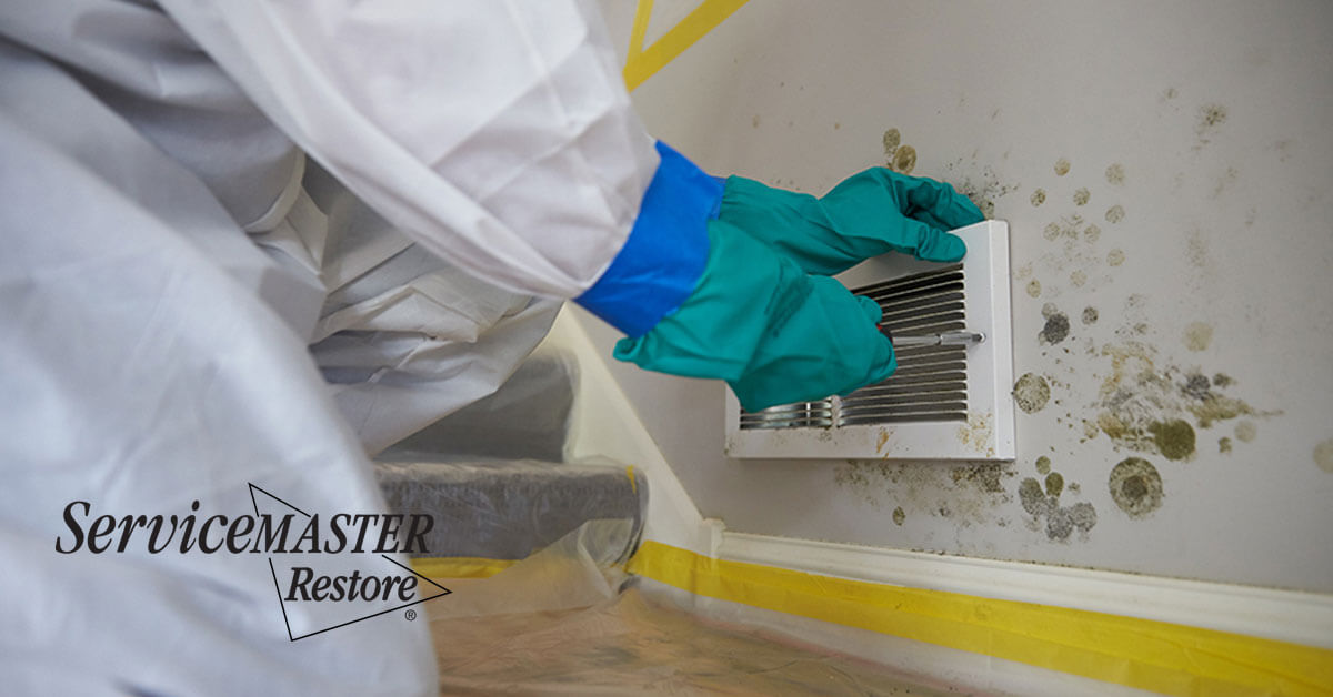 Professional Mold Removal in Dunnigan, CA