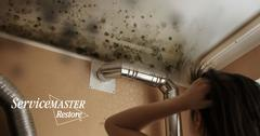 Professional Mold Removal in Folsom, CA