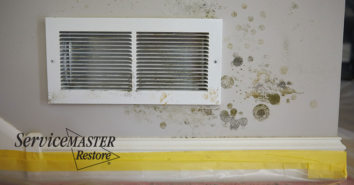 Certified Mold Removal in Clarksburg, CA