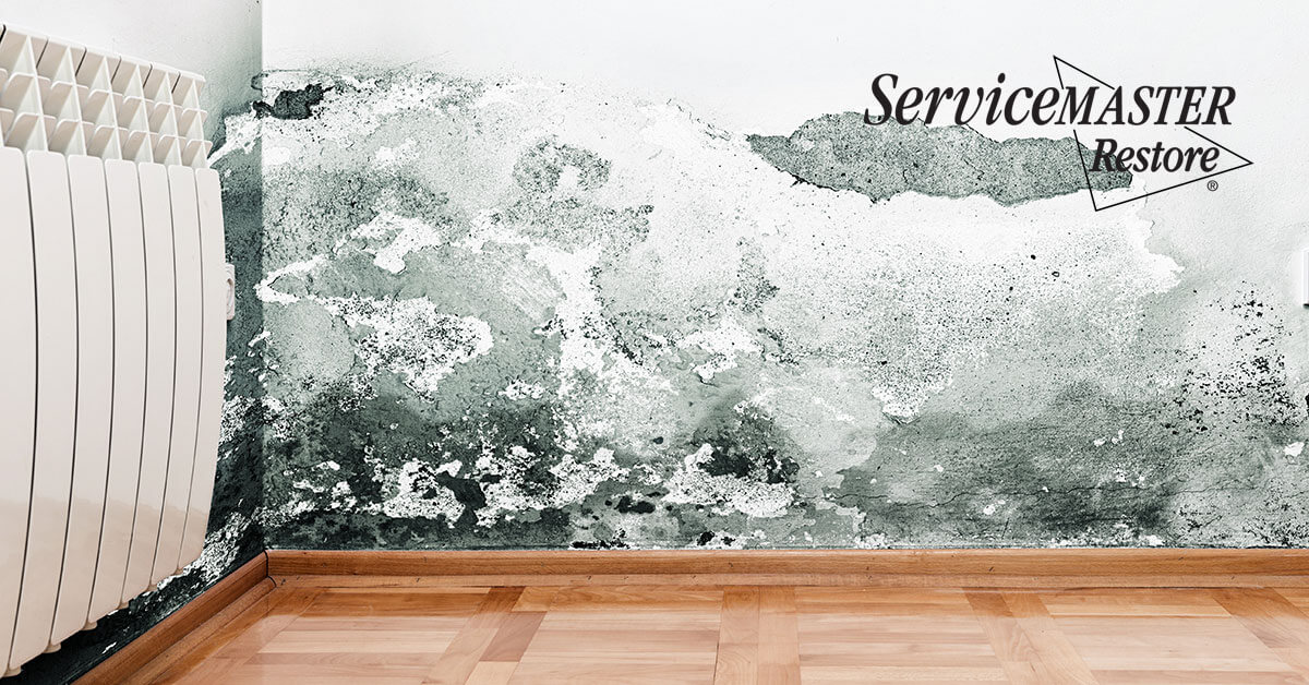 Professional Mold Removal in Carmichael, CA