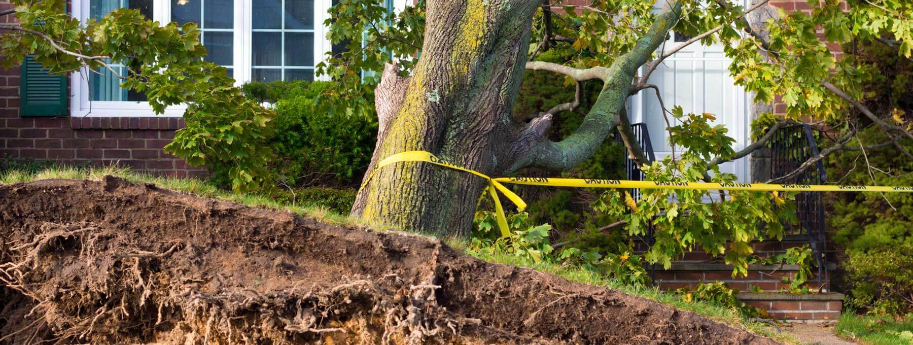 Wind and Tree Damage Restoration in Rockingham, NC