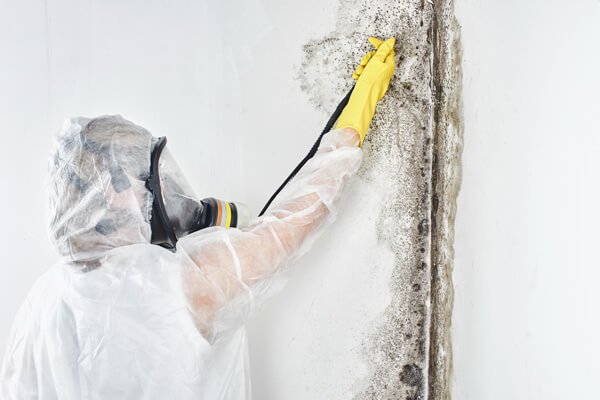 Mold Abatement Contractors in Ingham County Michigan.
