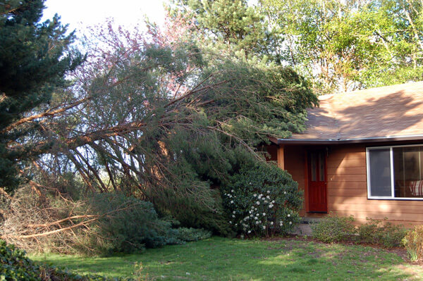 Wind Damage Repair in Ingham County Michigan.