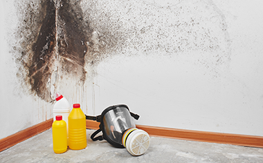 mold removal in Lansing, MI