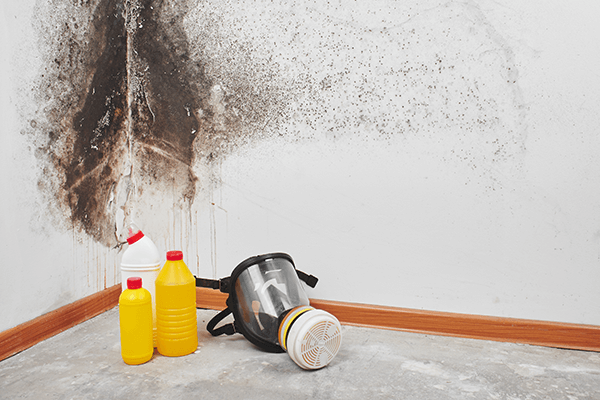 Mold Removal & Mold Remediation in Monroe, NC