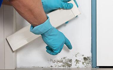 mold removal in Dallas, TX