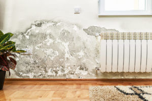 Mold Removal & Mold Remediation in San Antonio, TX