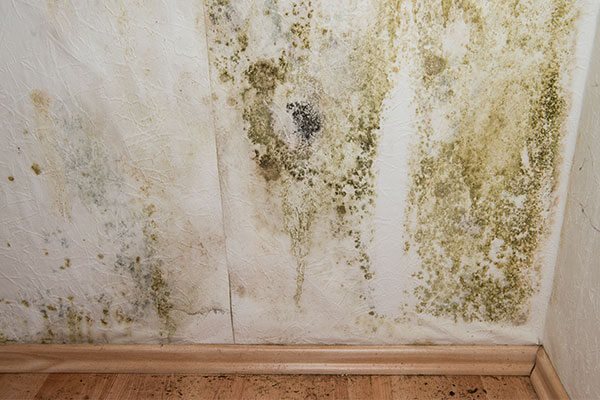Mold Remediation in Warren, MI