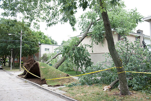 Storm Damage Repair in Warren, MI