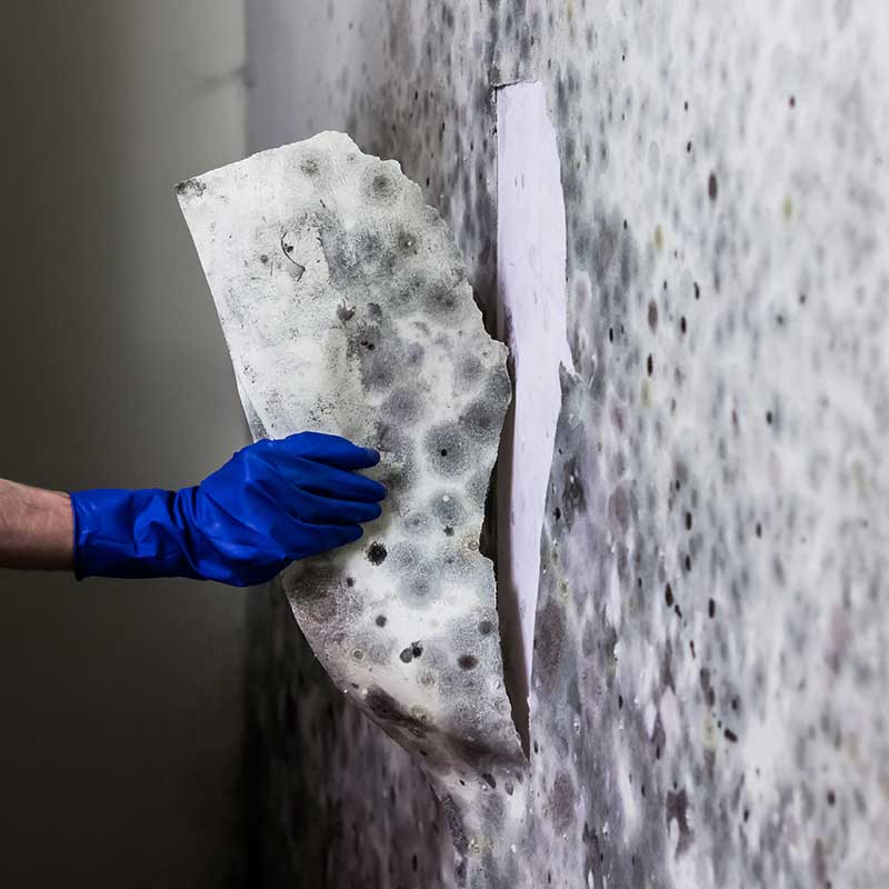 Mold Removal and Damage Restoration in Warren, MI