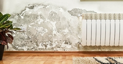 A Hard Pass: The 5 Dangers Of Buying A House With Mold